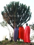 Rural Kenya of The Masai/ La Kenia rural de los Masai